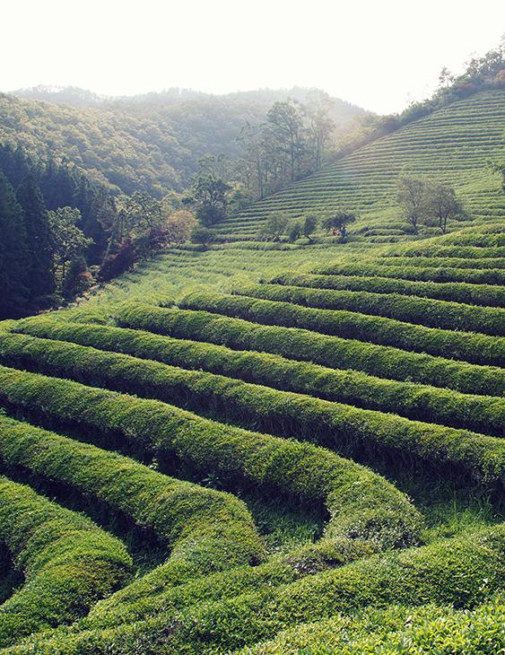 農地,林地,旱地,土地,賣土地,畸零地.買賣方式